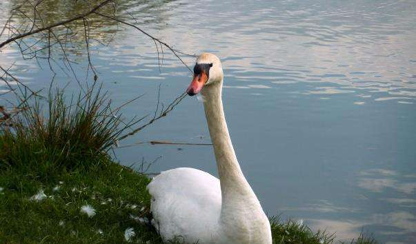 Парк птахів Горобці