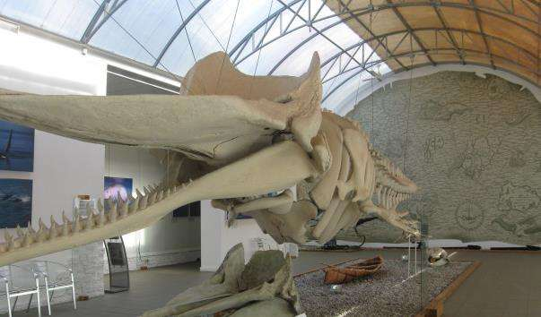 Музей Світового Океану