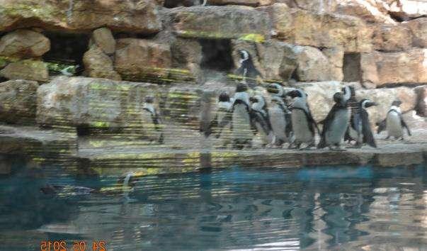 Єрусалимський зоопарк