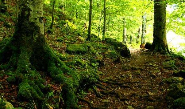 Національний парк Биоградская Гора