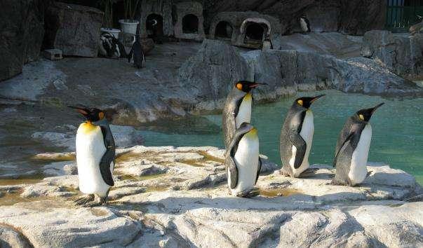 Зоопарк Уено
