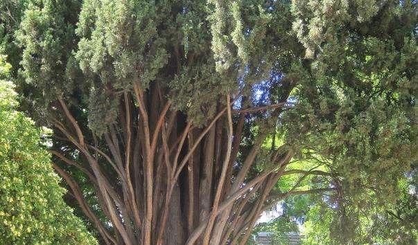 Королівський ботанічний сад