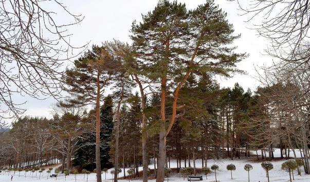 Кисловодський парк