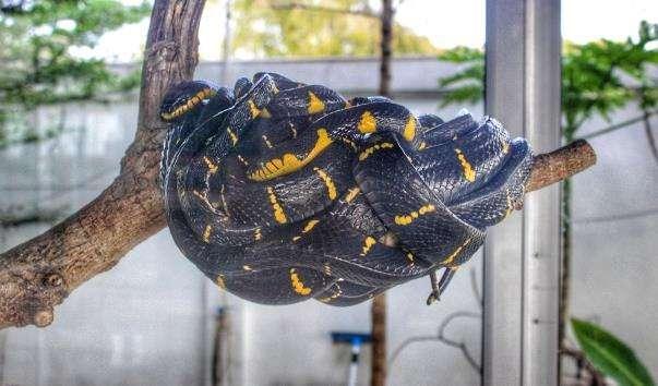 Зміїна ферма Cobra