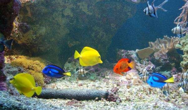 Водний музей Аквариа