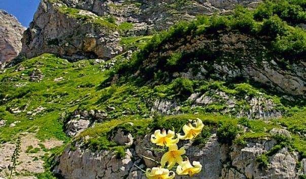 Гора Фішт