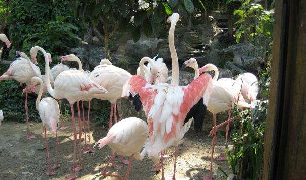 Зоопарк Чіанг Май