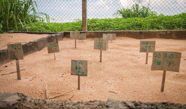 Черепахова ферма в Косгоде