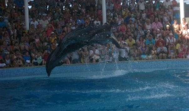 Коктебельський дельфінарій