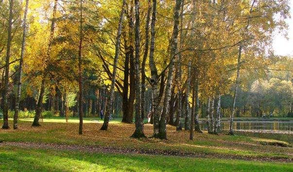 Парк Соснівка