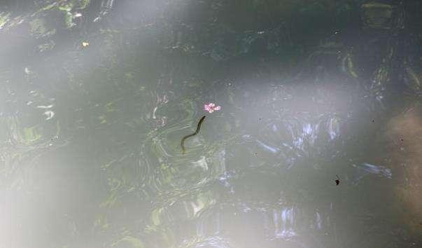 Водоспад Тургут