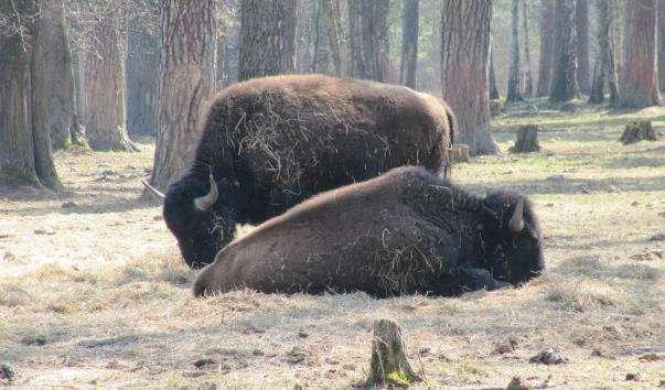 Приокско-Терасний державний природний біосферний заповідник