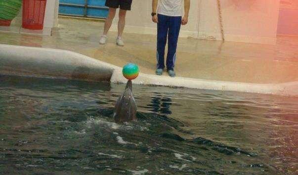 Дельфінарій у Варні