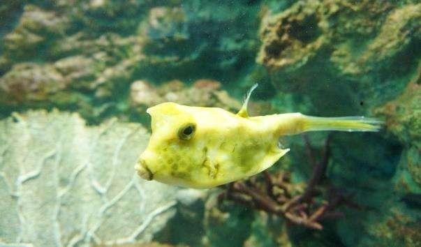 Морський акваріум у Пхукеті