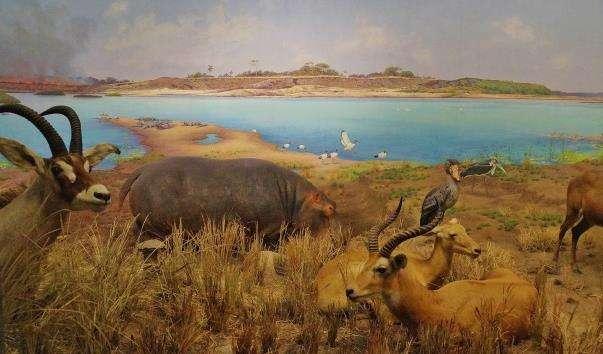 Американський музей природної історії