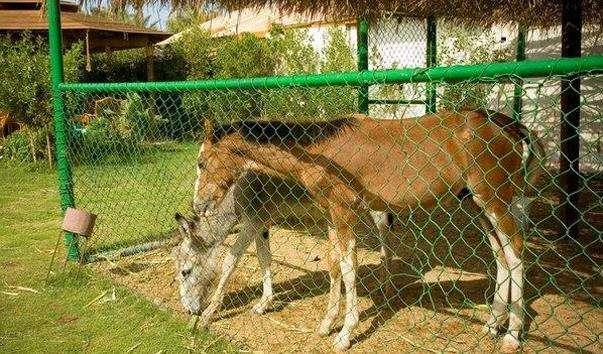 Зоопарк при готелі Dessole Royana Rojana