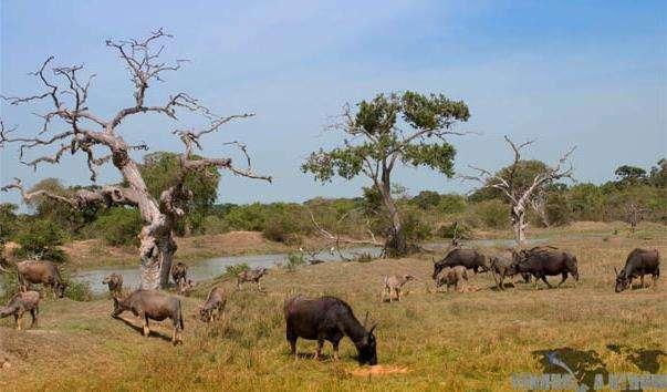 Національний парк «Яла»