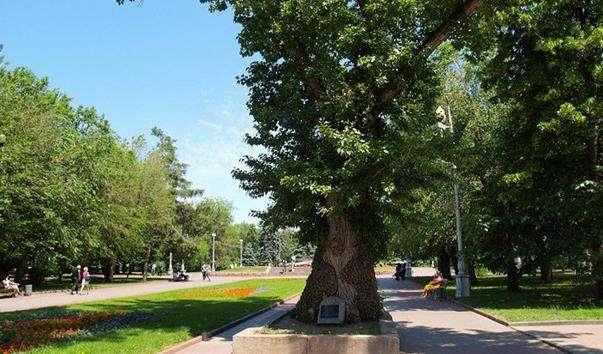 Тополя на площі Полеглих Борців