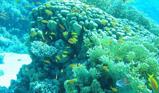 Риф Острова в Дахабі