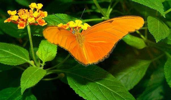 Парк метеликів